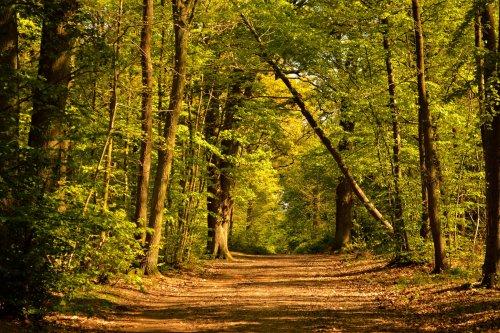 Les forêts wallonnes sont à tout le monde! Privatiser les forêts wallonnes équivaut à un détournement de bien public